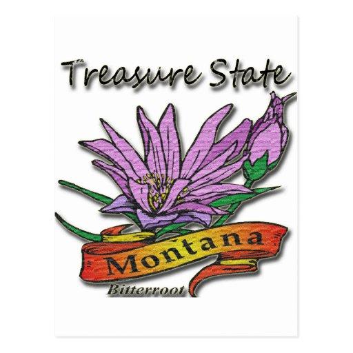 Montana Treasure State Bitterroot Post Card