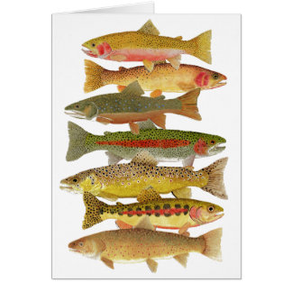 Montana Trout Card