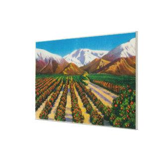 Montaña vieja de Baldy de las arboledas anaranjada Lona Envuelta Para Galerías