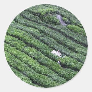 Montañas de Cameron de la plantación de té Etiquetas Redondas