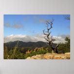Montañas de Chiricahua, AZ. Posters