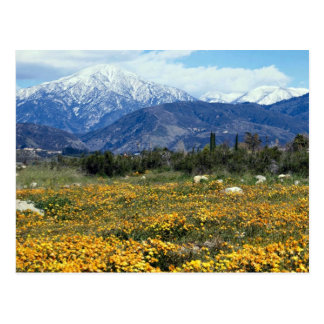 Montañas de San Bernardino, nieve, flores Tarjeta Postal