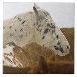 Montañas del Big Horn, caballos en la nieve Tejas Ceramicas