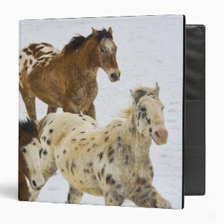"""Montañas del Big Horn, caballos que corren en la Carpeta 1 1/2"""""""
