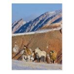 Montañas del Big Horn, caballos que corren en la n Tarjetas Postales