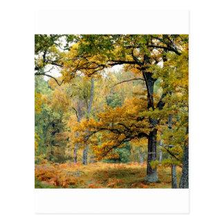 Montañas del escocés del bosque del viejo postales