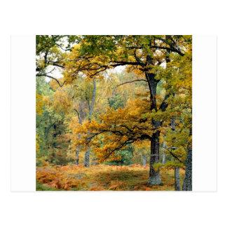 Montañas del escocés del bosque del viejo tarjetas postales