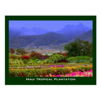 Montañas del oeste de Maui de la plantación tropic Tarjeta Postal