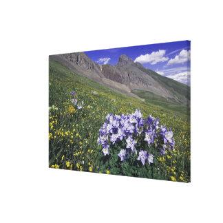Montañas y wildflowers en el prado alpino, azul lona envuelta para galerías