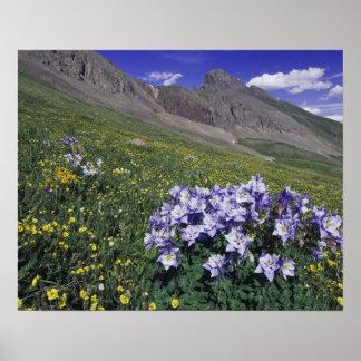Montañas y wildflowers en el prado alpino, azul póster