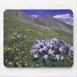 Montañas y wildflowers en el prado alpino, azul tapetes de raton