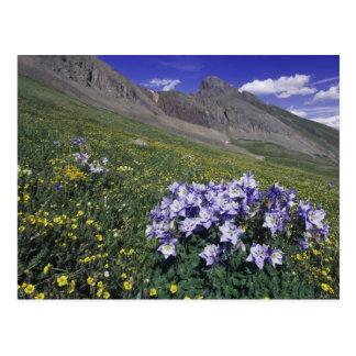 Montañas y wildflowers en el prado alpino, azul tarjeta postal