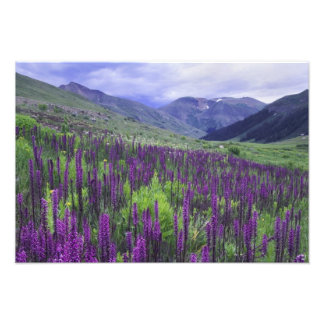 Montañas y wildflowers en prado alpino, 2 impresión fotográfica