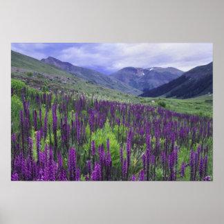 Montañas y wildflowers en prado alpino, 2 poster