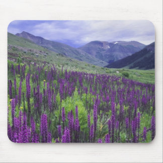 Montañas y wildflowers en prado alpino, 2 tapete de raton