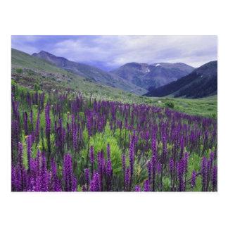 Montañas y wildflowers en prado alpino, 2 postal