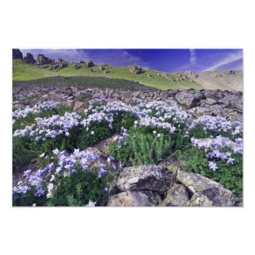 Montañas y wildflowers en prado alpino, fotografía