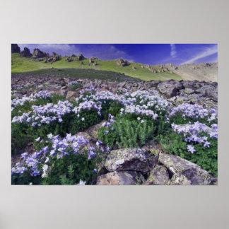 Montañas y wildflowers en prado alpino, impresiones