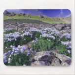 Montañas y wildflowers en prado alpino, tapete de raton