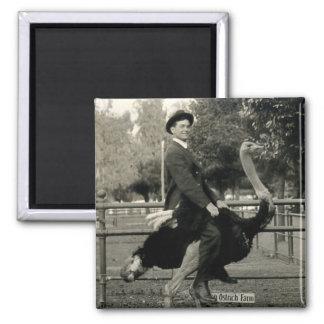 Montar a caballo 1910 de la avestruz imanes de nevera