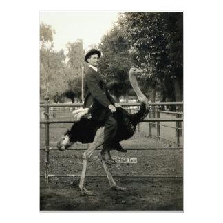 """Montar a caballo 1910 de la avestruz invitación 5"""" x 7"""""""