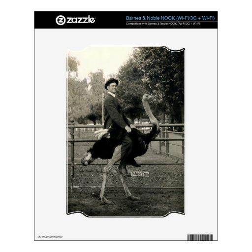 Montar a caballo 1910 de la avestruz NOOK calcomanía