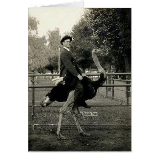 Montar a caballo 1910 de la avestruz felicitaciones