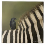 Montar a caballo Bifurcación-Atado del Drongo (ads Azulejo Cuadrado Grande