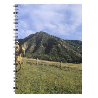 Montar a caballo del vaquero a través del campo libros de apuntes con espiral