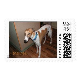Monte greyhound Postage
