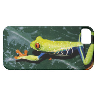 Monte Verde, Costa Rica. Red-eyed tree frog iPhone 5 Cover