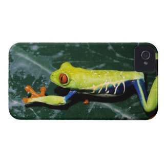 Monte Verde, Costa Rica. Red-eyed tree frog Case-Mate iPhone 4 Case