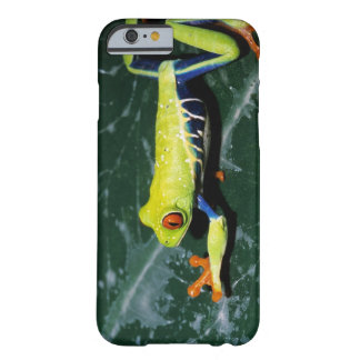 Monte Verde, Costa Rica. Red-eyed tree frog Barely There iPhone 6 Case