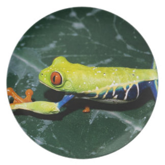 Monte Verde, Costa Rica. Red-eyed tree frog Dinner Plates