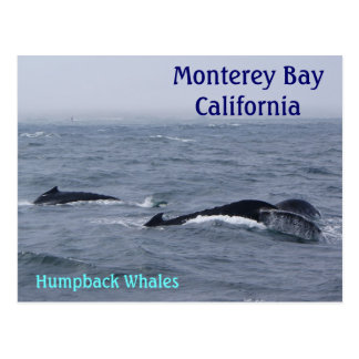 Monterey Bay California Postcard