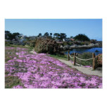 Monterey Bay Coast Line, Spring Path Photo Poster