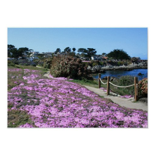Monterey Bay Coast Line, Spring Path Photo Poster
