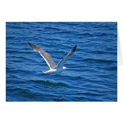 Monterey Bay Seagull Card