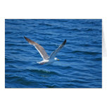 Monterey Bay Seagull Greeting Cards