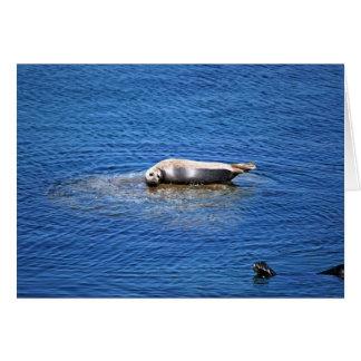 Monterey Bay Seals Greeting Card