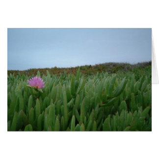 Monterey Beach Flower Card
