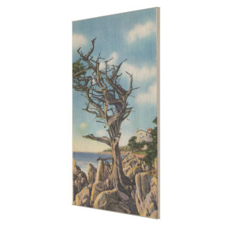 Monterey, CA - Old Witch Tree on 17 Mile Canvas Print