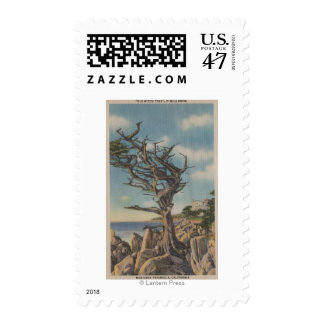 Monterey, CA - Old Witch Tree on 17 Mile Postage