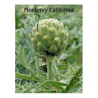 Monterey California Artichoke Postcard