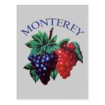 Monterey California Grapes Postcard
