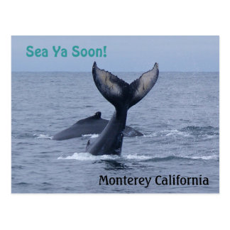 Monterey California Whale Tail Postcard