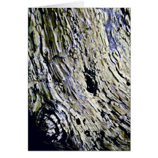 Monterey Cypress Bark Cards