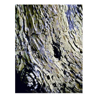 Monterey Cypress Bark Postcard