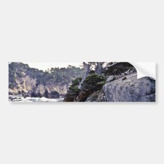 Monterey Cypresses On Headland Bumper Stickers