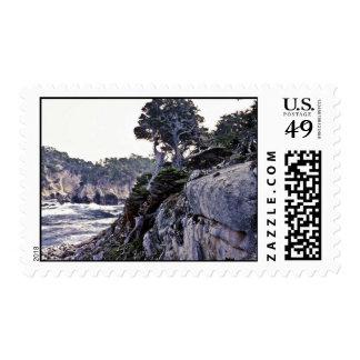 Monterey Cypresses On Headland Stamp